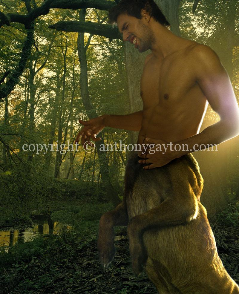 14_Fire_Woods_02_Copyright_Anthony_Gayton